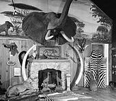 1940S 1950S Room With Big Game Trophies Mounted Around A Fireplace