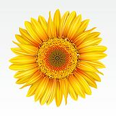 Clip Art of Background with sunflowers k6619268 - Search ...