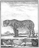 line art   an 18th century