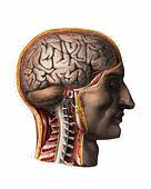 http://photos2.fotosearch.com/bthumb/VSL/Anatomy/094_1866.jpg