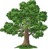 Image result for oak tree clipart